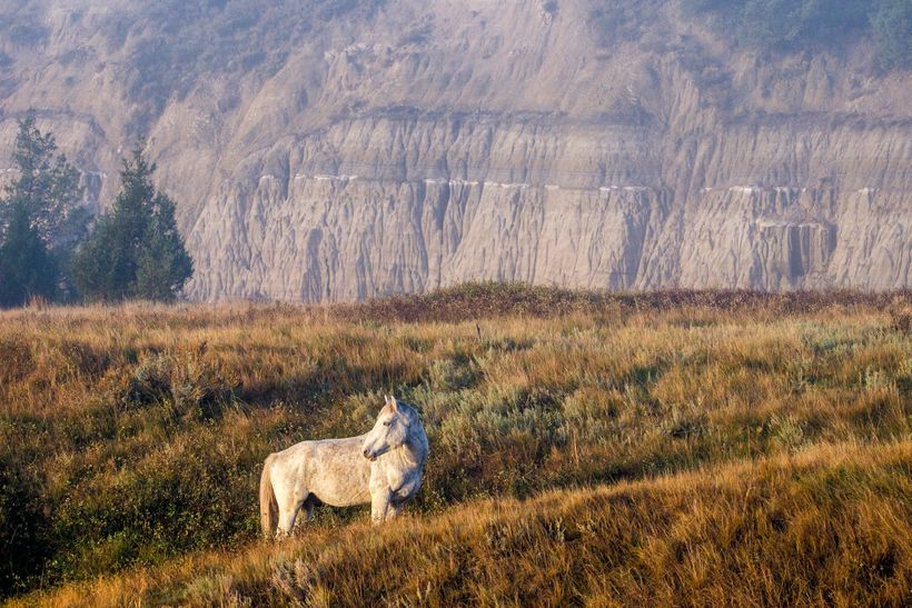 <em>A feral horse at Theodore Roosevelt National Park, most commonly seen in the south unit.</em>