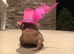 Here's A Toad In A Top Hat And Monocle Because, Y'Know, Why Not?