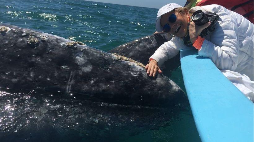 Espinosa petting a baby gray whale in San Ignacio Lagoon, Baja, Mexico