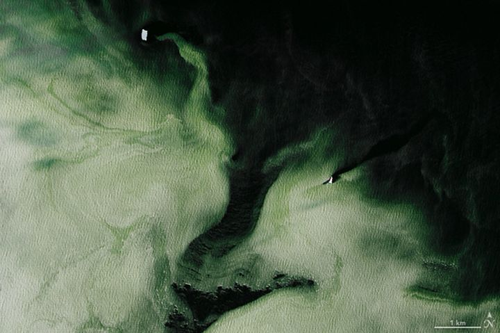 This is the second zoomed-in area showing the green hue of the Antarctic ice.