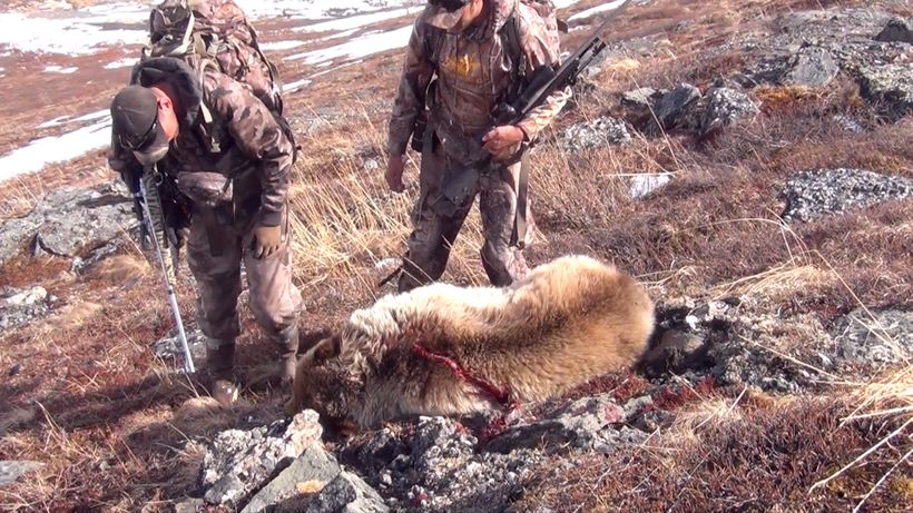 Grizzly Hunting in Alaska