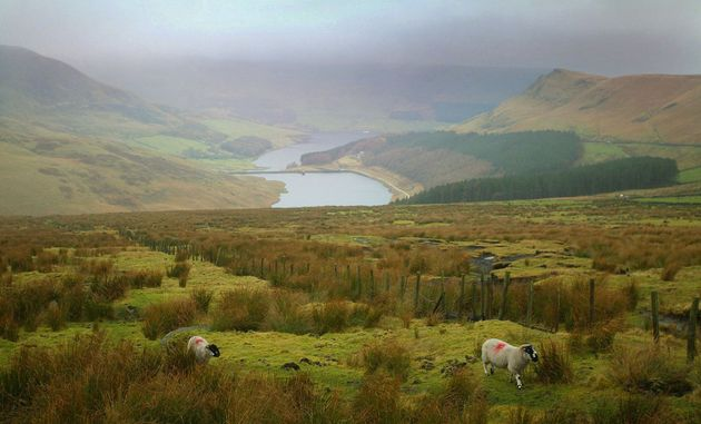 Lytton's body was found on Saddleworth Moor, in the