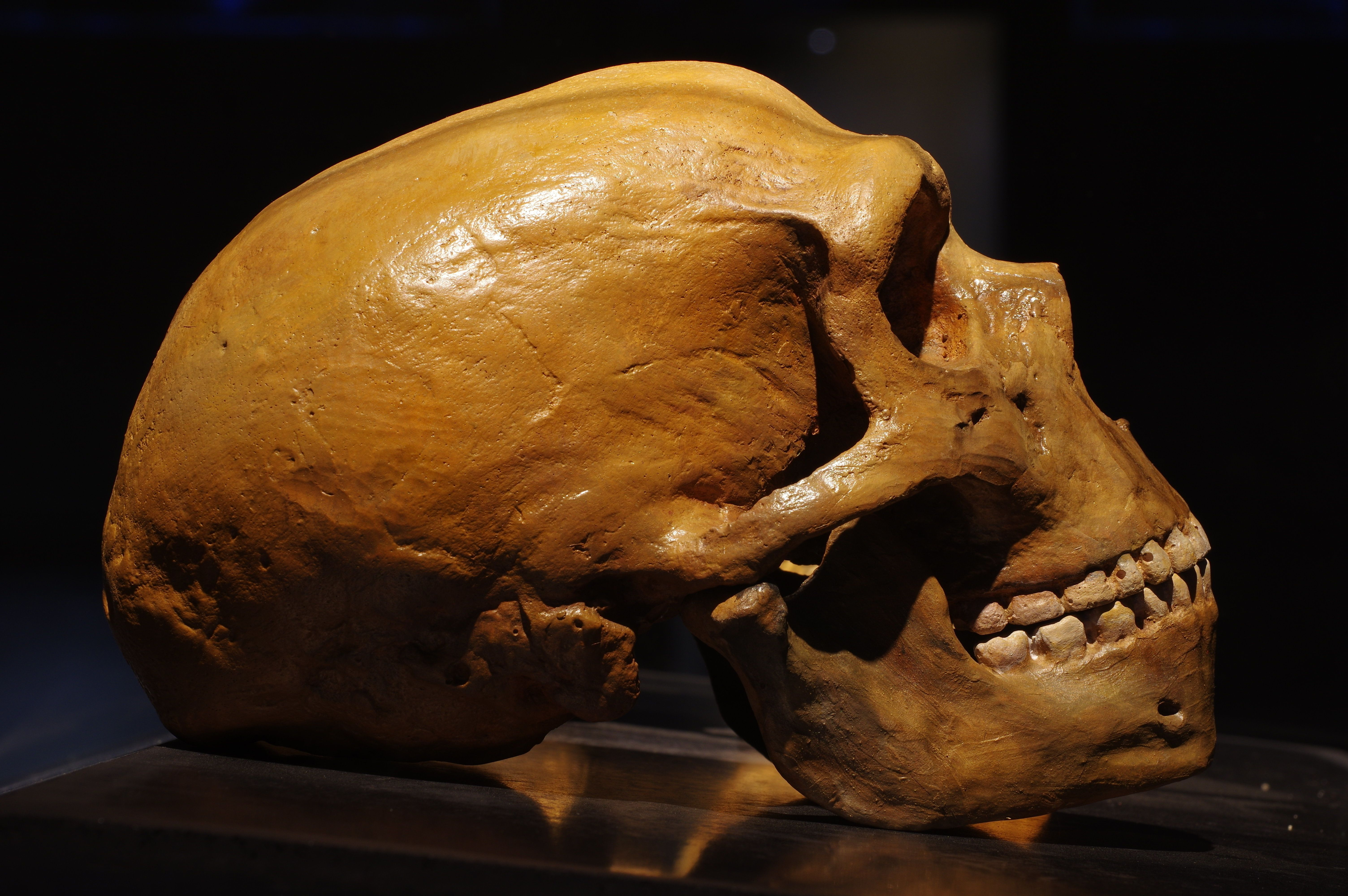 Neanderthals Munched On 'Aspirin' And Woolly