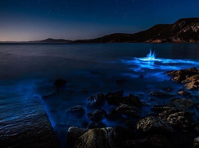 Bioluminescence at Rocky Cape Tasmania