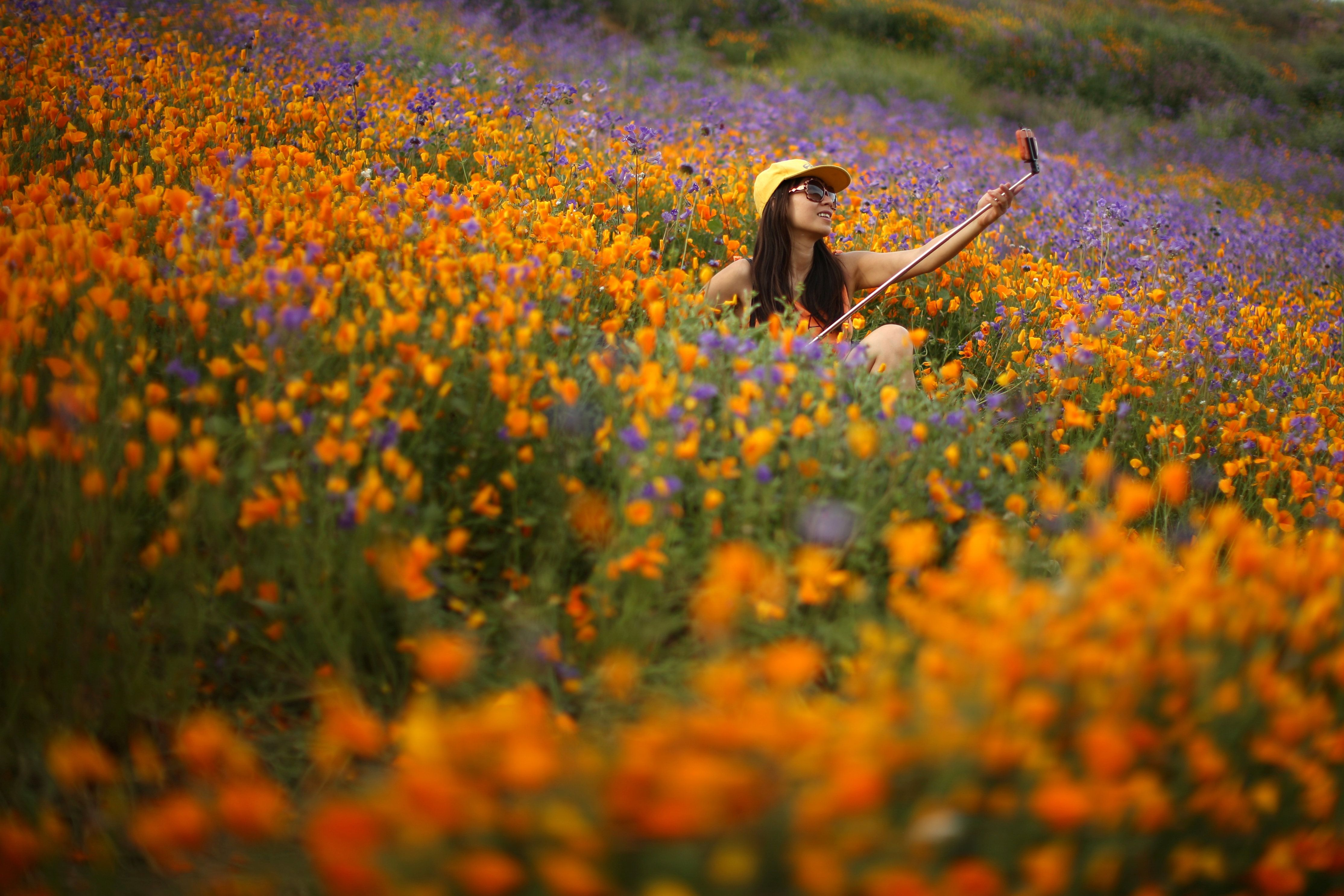 A woman uses a selfie stick to photograph herself in a massive spring wildflower bloom caused by a wet winter in Lake Elsinor