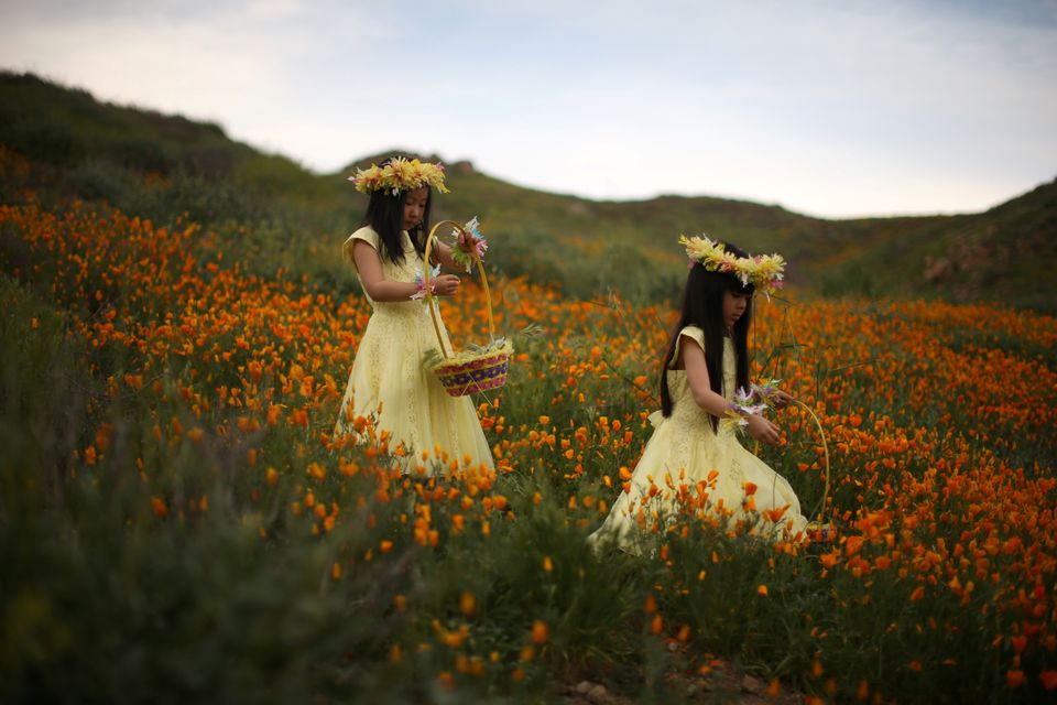 Julia Lu, 5, (left) and Amy Liu, 5, walk through the wildflower bloom in Lake Elsinore, California.