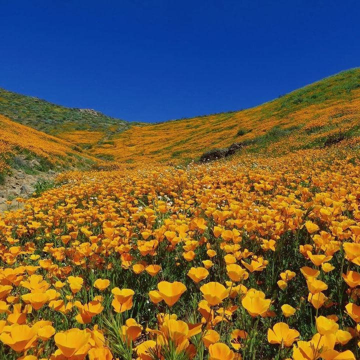 "<p>Walker Canyon, California <a rel=""nofollow"" href=""https://www.instagram.com/p/BRkkmJVgS2z/"" target=""_blank"">@HAMEDASGARI</a></p>"