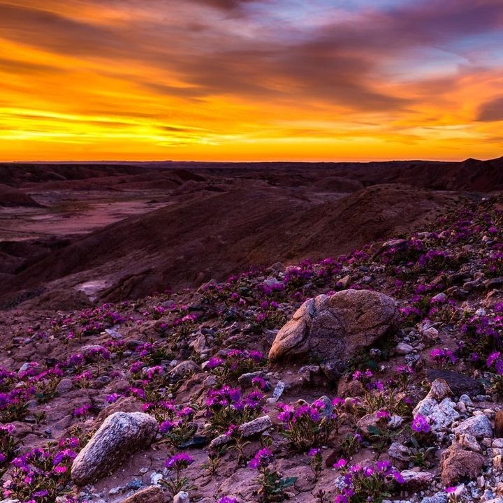 "<p>Anza-Borrego Desert State Park, California <a rel=""nofollow"" href=""https://www.instagram.com/p/BRYa1cBlv_i/"" target=""_blank"">@ZANDTRICK</a></p>"