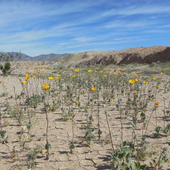 "<p>Anza-Borrego Desert State Park, California <a rel=""nofollow"" href=""https://www.instagram.com/p/BRlkCAmF8dH/"" target=""_blank"">@CALIFORNIATRAILMAP</a></p>"