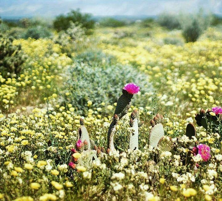 "<p>Anza-Borrego Desert State Park, California <a rel=""nofollow"" href=""https://www.instagram.com/p/BRkIxmehrKV/"" target=""_blank"">@DRPEAK2PEEK</a></p>"