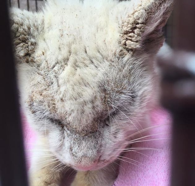 'Blind' Cat Dazzles Everyone After Opening His Stunning