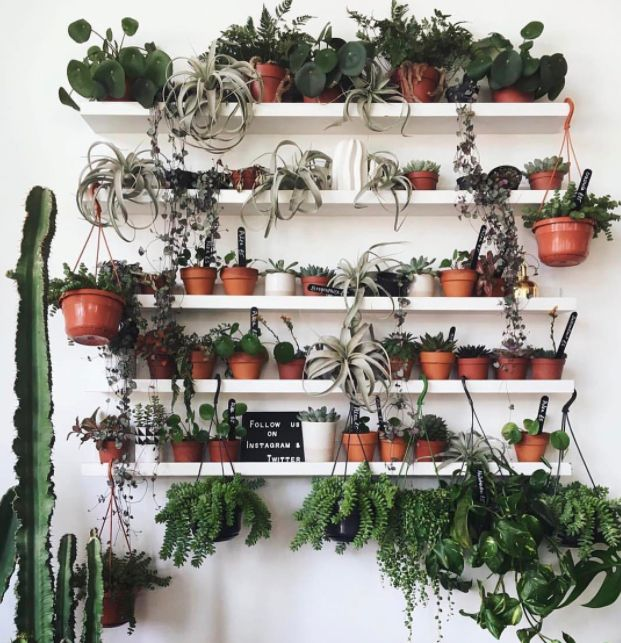 18 Instagram Accounts Giving Us Green-Fingered