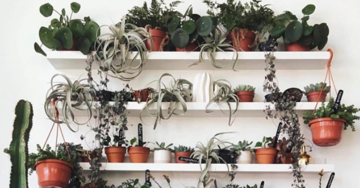 Ultimate Plant 18 Instagram Accounts Giving Us Green Fingered Goals Huffpost Uk