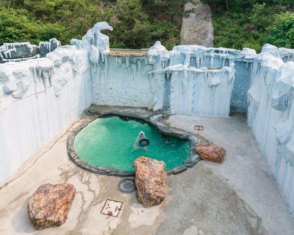 Dalian forest Zoo, China (2015)