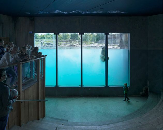 A polar bear swims at Rotterdam Zoo in the Netherlands in