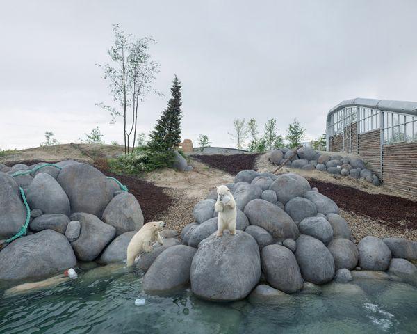 خرس های قطبی