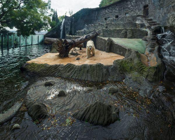 Zoo Praha, Czech Republic (2014)