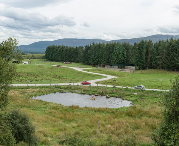 Highland Wildlife Park, Kincraig, Scotland (2016)