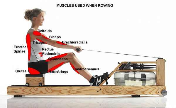 "Rowing equipment    <a rel=""nofollow"" href=""https://www.fitnesszone.com/"" target=""_blank"">www.fitnesszone.com</a>"