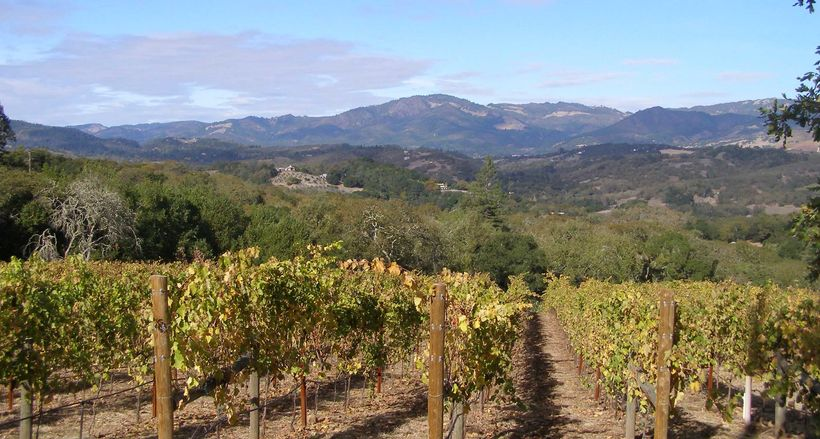 Vineyard on Sonoma Mountain AVA with background of the Mayacamas Mountains