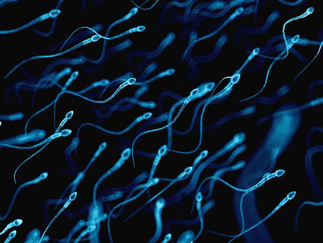 Scientists Have Finally Solved The Mystery Of How Sperm