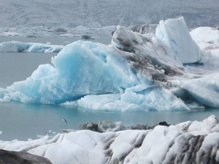 Calving Glacier and Iceburgs