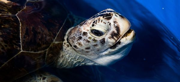 Sea Turtle Named 'Bank' Dies After Surgery To Remove 915 Coins