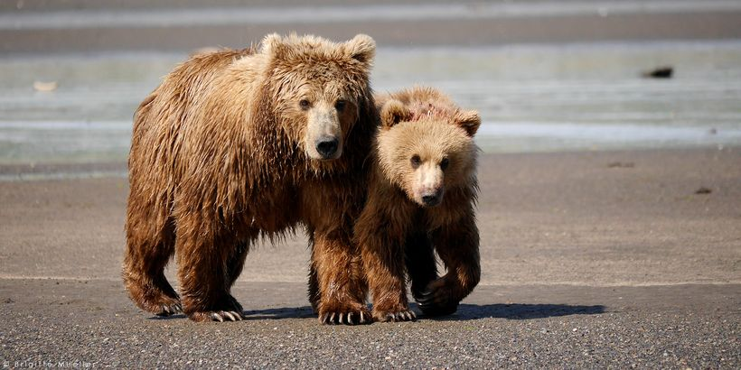 US Senate votes to repeal Alaska wildlife protections