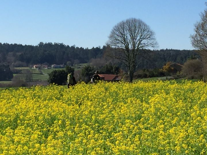 <p>Galicia in the spring</p>