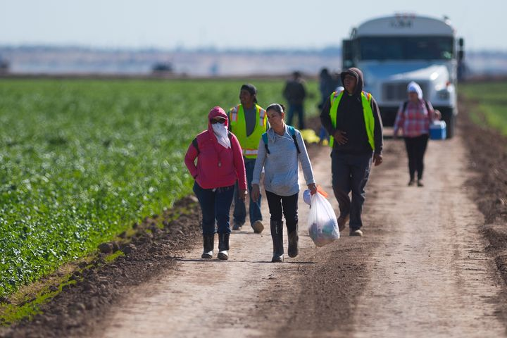 Temporary workers walk off a lettuce farm at the end of their shift near Yuma, Arizona, on Feb. 15.