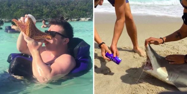 Spring Breakers Are Abusing Sea Creatures To Get