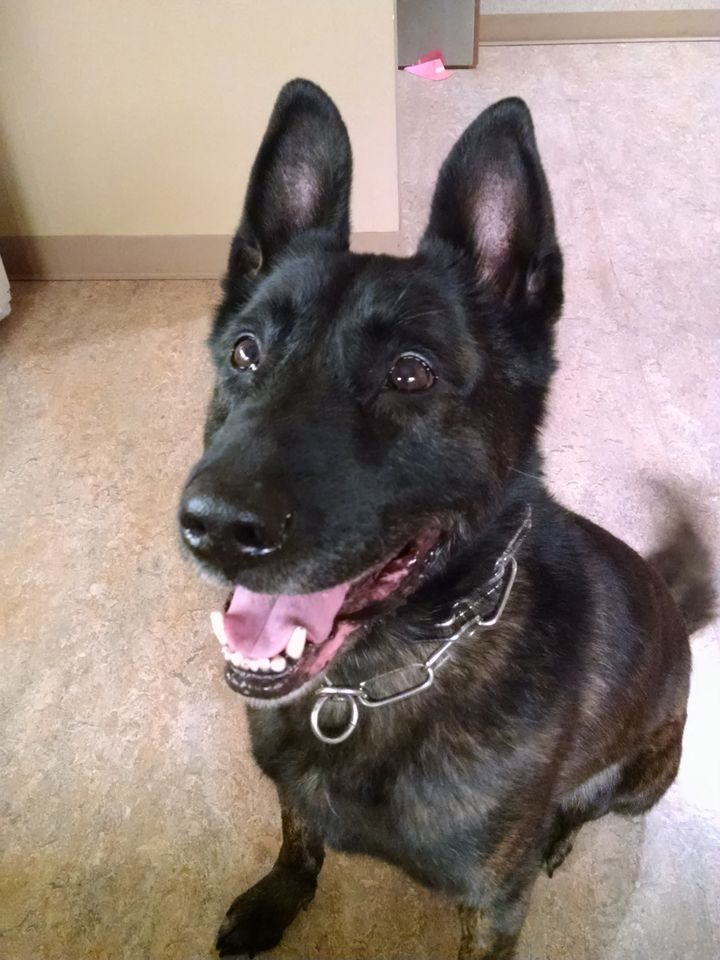 Spencer a great police dog!