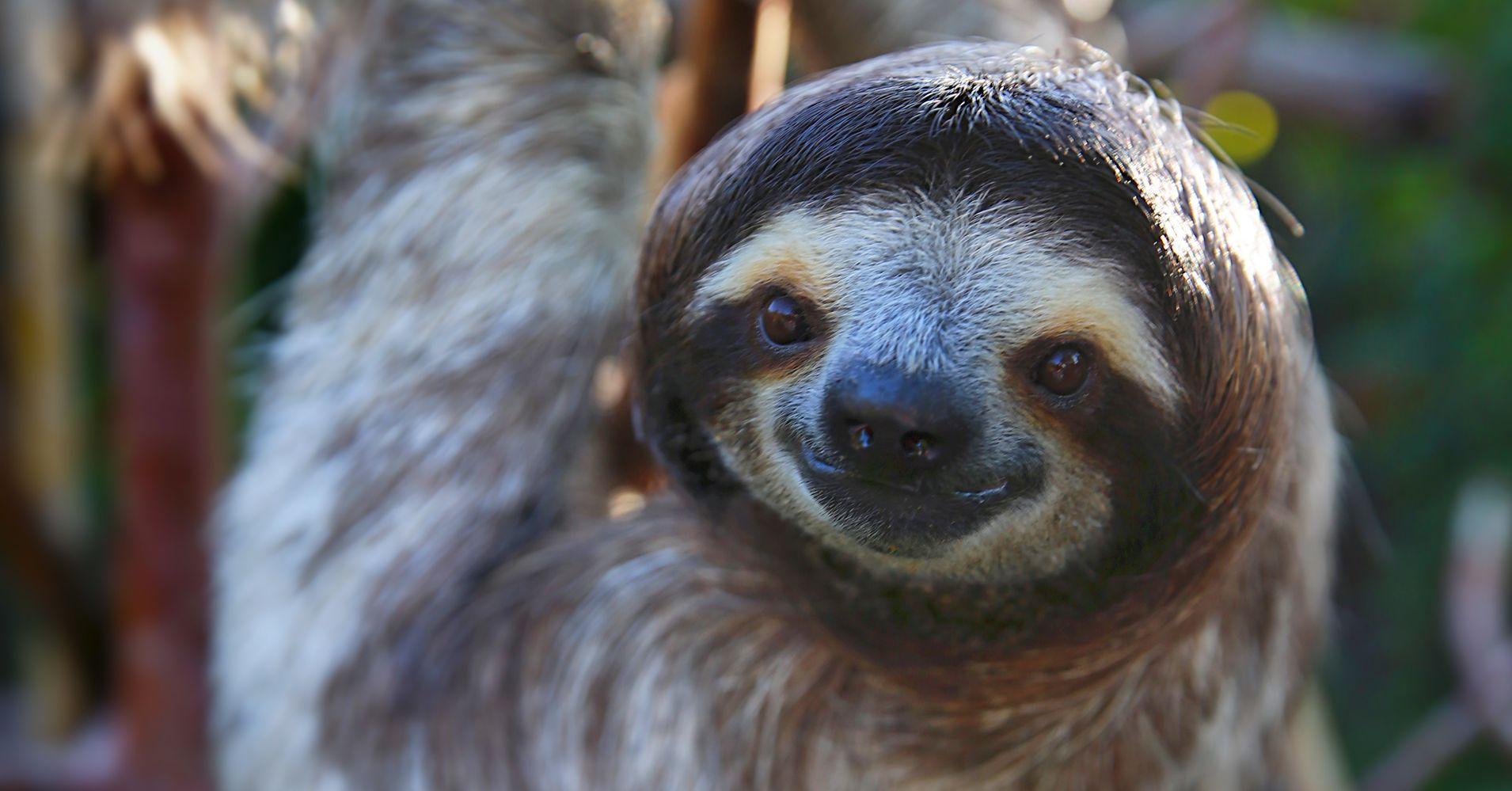 sloths huffpost