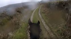 Man Takes Retired Racehorse Out For Ride, It Doesn't End