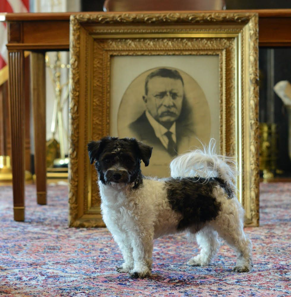 Interior Secretary Ryan Zinke's dog,Ragnar, is picturedat the Interior Department with a portrait former Presiden