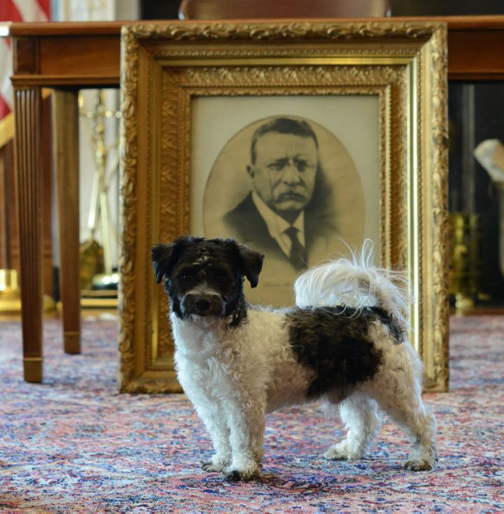 Interior Secretary Ryan Zinke's dog, Ragnar, is pictured at the Interior Department with a portrait former Presiden