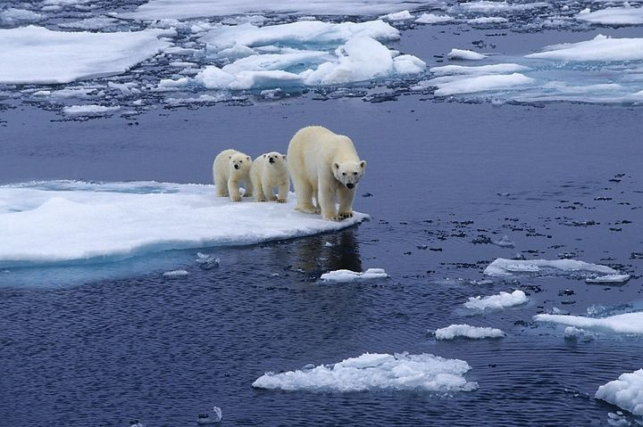 Sea Ice, Nature, And The Trump Budget | HuffPost