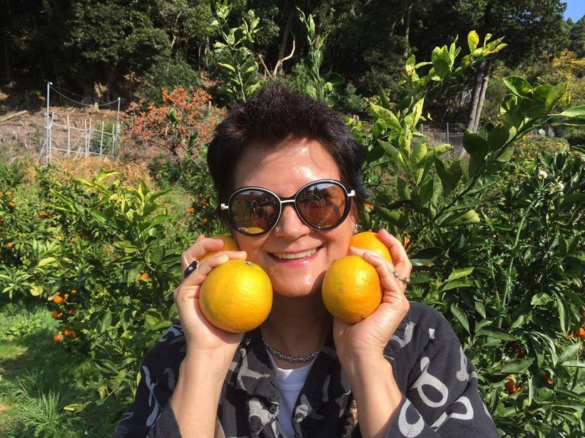 Mikan (Japanese orange) orchard