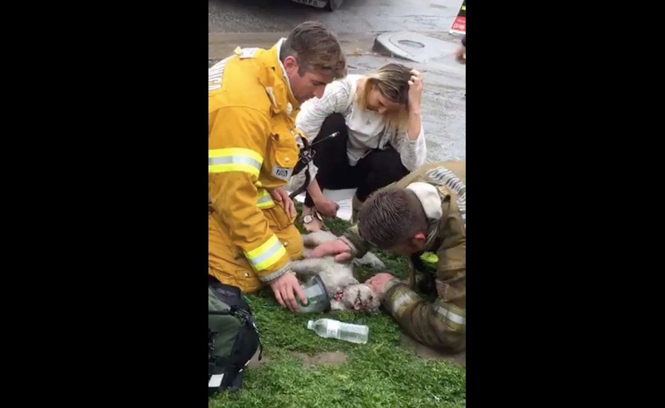 Hero Firefighters Revive 'Lifeless' Dog After Apartment