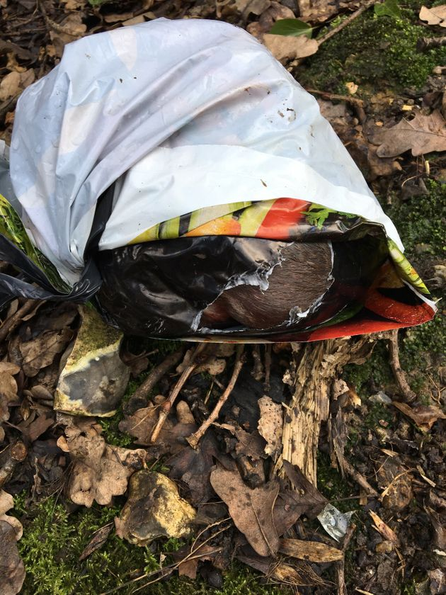 The bodies of four puppies were found in a carrier bag in Hertfordshire on National Puppy