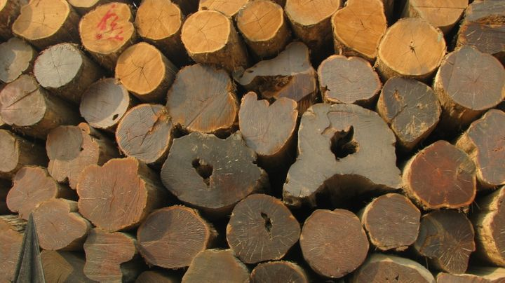 Local communities in countries like Myanmar typically see few benefits from sales of timber and other natural resources