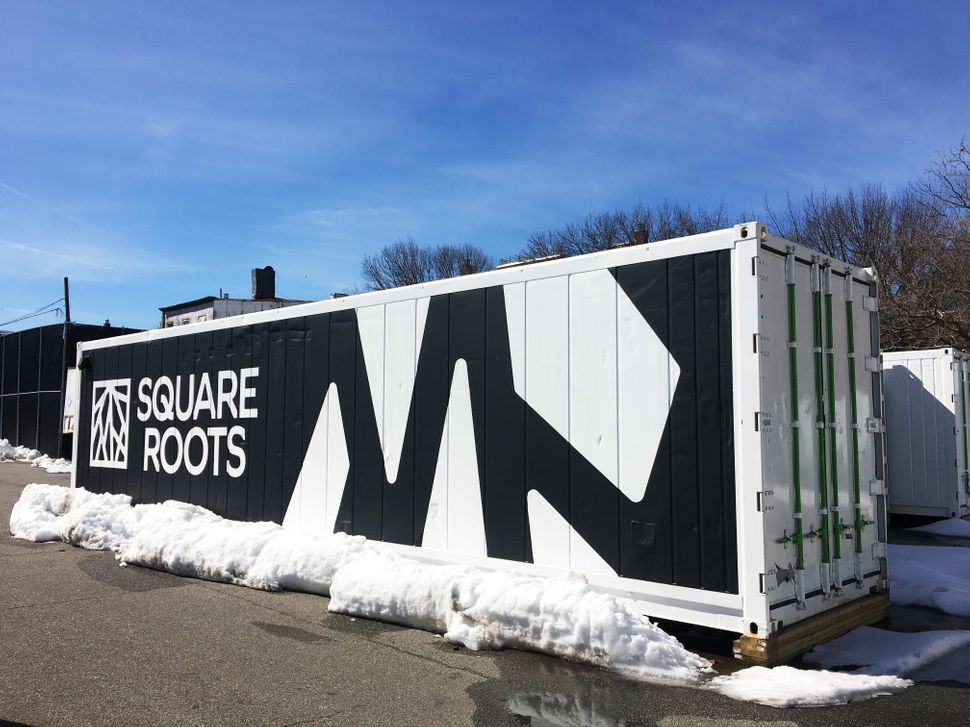Ten shipping containers like this house Square Roots' local farming initiative in Brooklyn, New York.