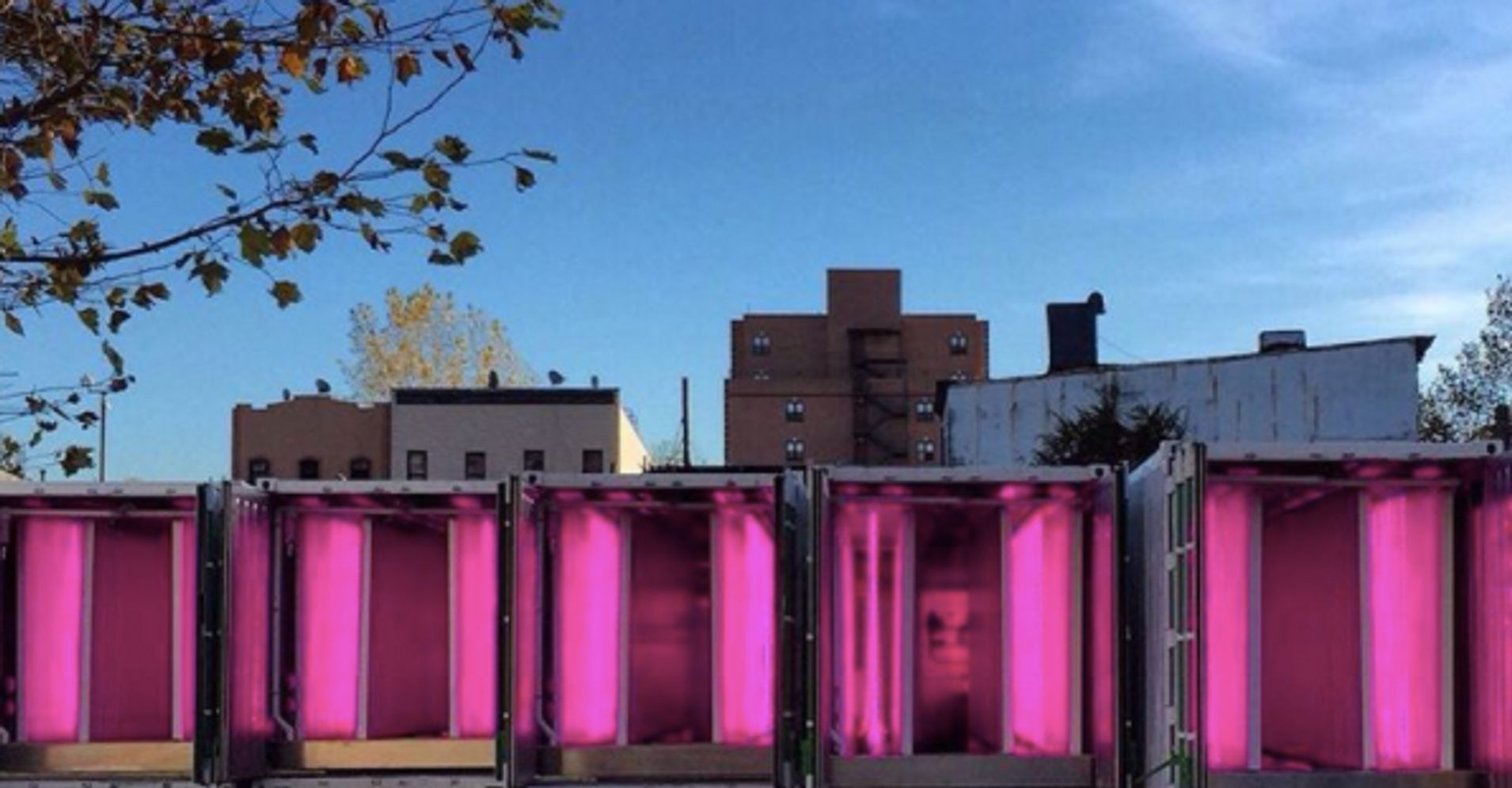 A Future Farming Industry Grows In Brooklyn   HuffPost