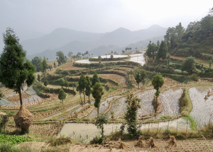<strong>Terraced fields of Ming'ao.</strong>