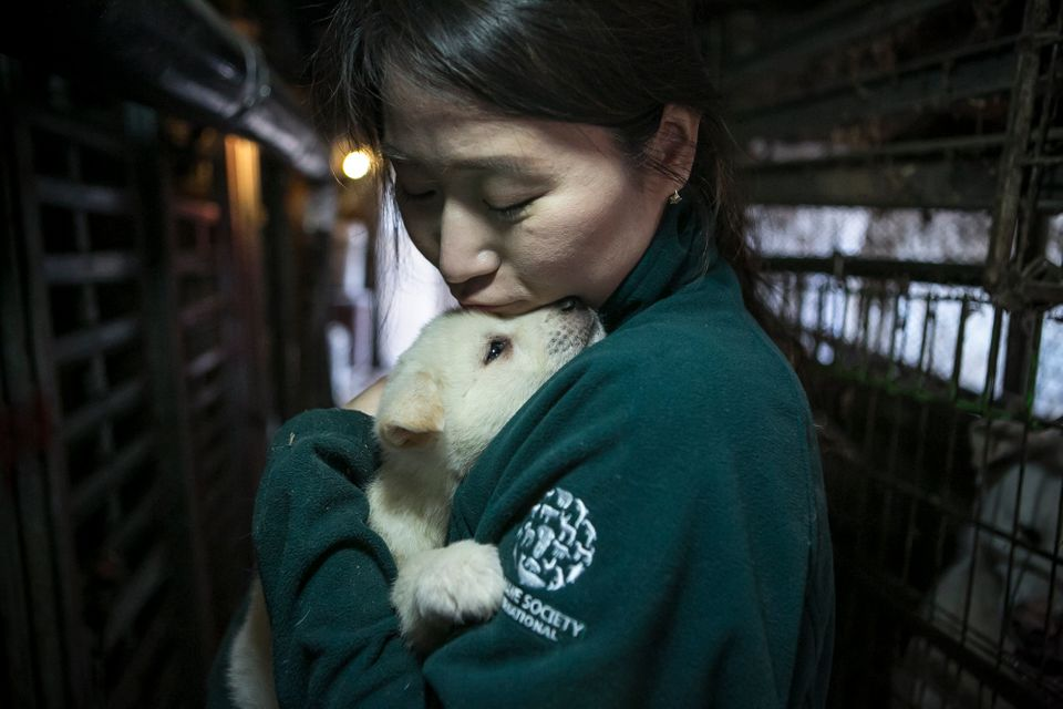 Dozens of dogs are heading to new homes in the U.S. after being rescued from a South Korean dog meat farm.