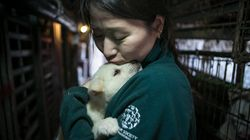 Dozens Of Dogs Rescued From South Korean Meat Farm Arrive In