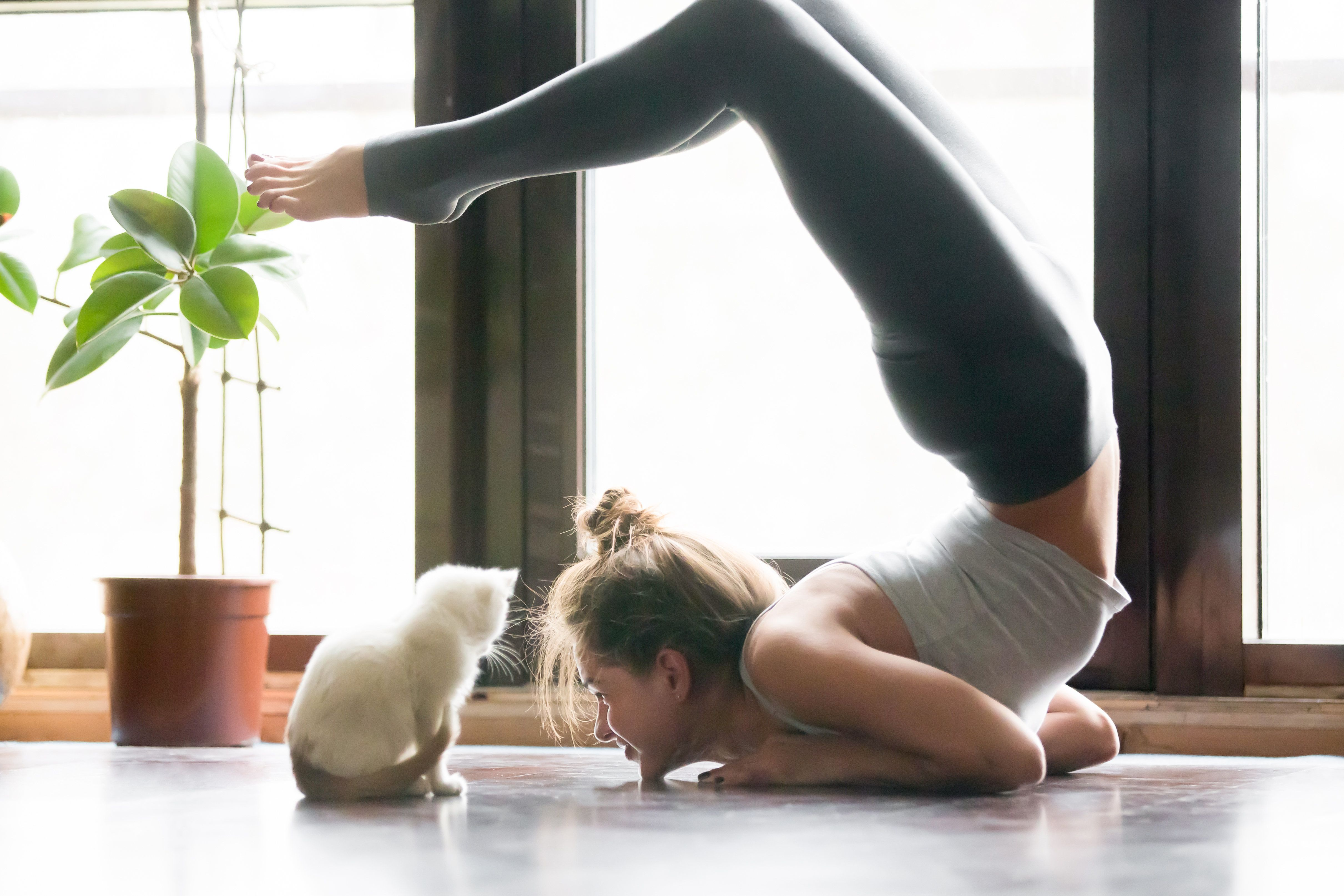 During cat yoga classes, kitties are free to roam throughout the studio while practitioners flow through poses.