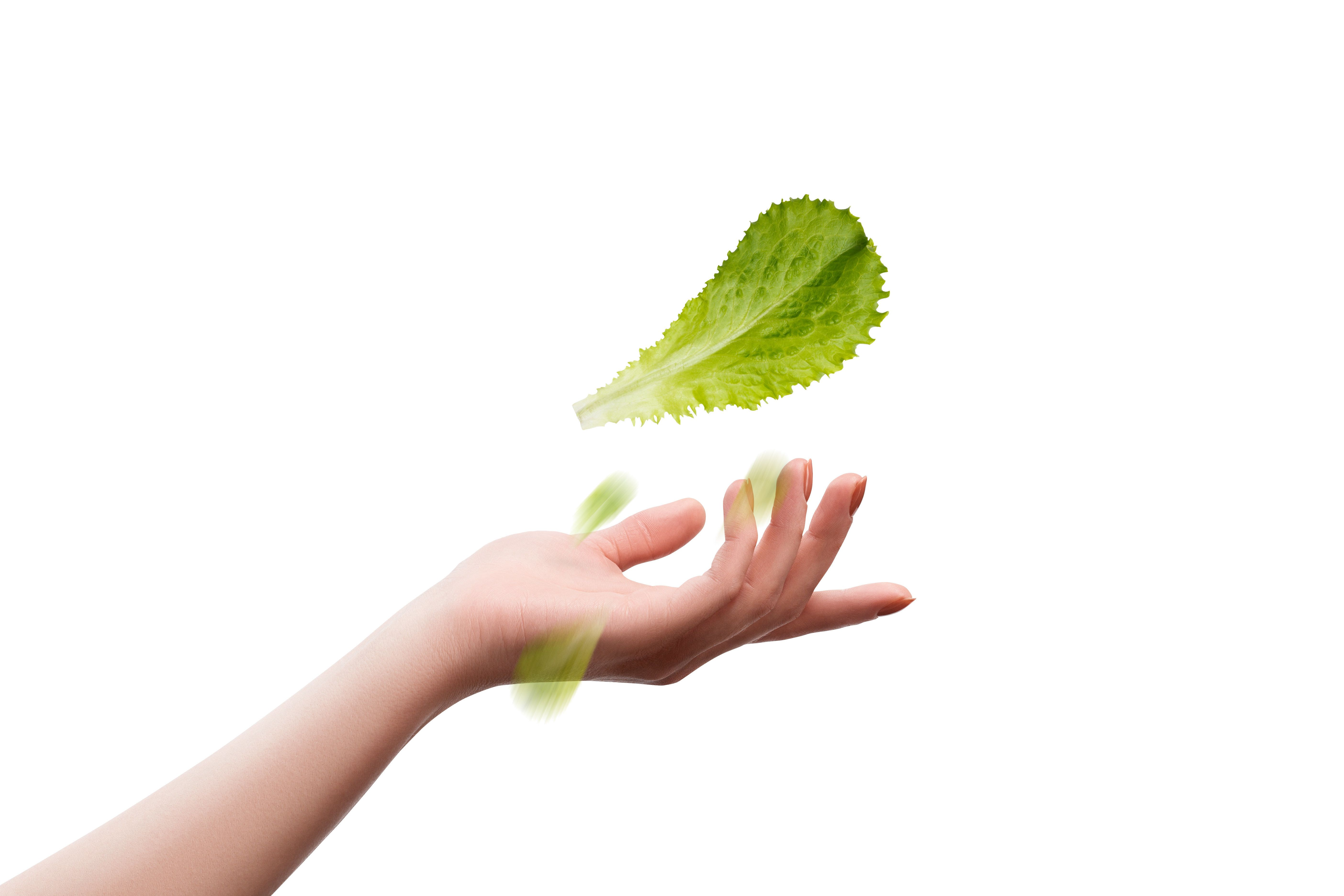 Leaf of lettuce salad in female hand on a white background