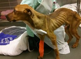 Social Media Sparks Rise In Animal Cruelty Investigations, Says RSPCA