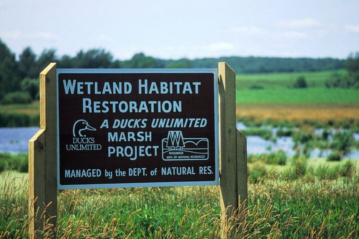 Wetland restoration project sponsored by the hunting and conservation organization Ducks Unlimited, Barron County, Wisconsin.